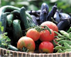 赤身肉に合う夏野菜