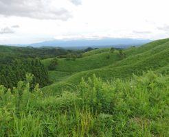 熊本県阿蘇山にある雄大な牧場